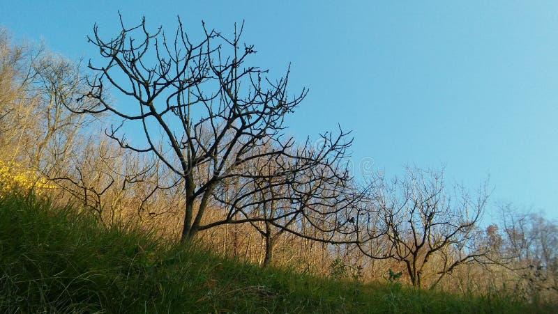 Blattlose Bäume lizenzfreies stockfoto