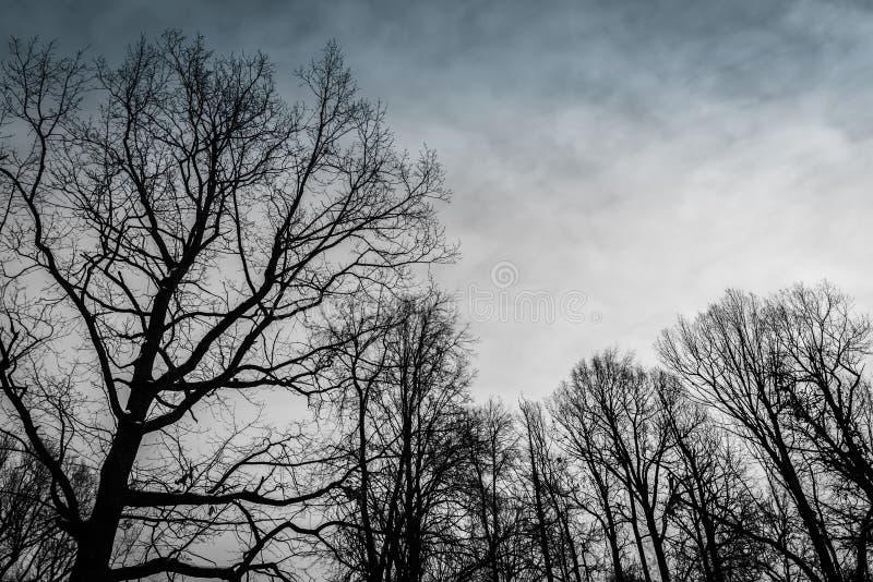 Blattlose Bäume im Winter stockfotos