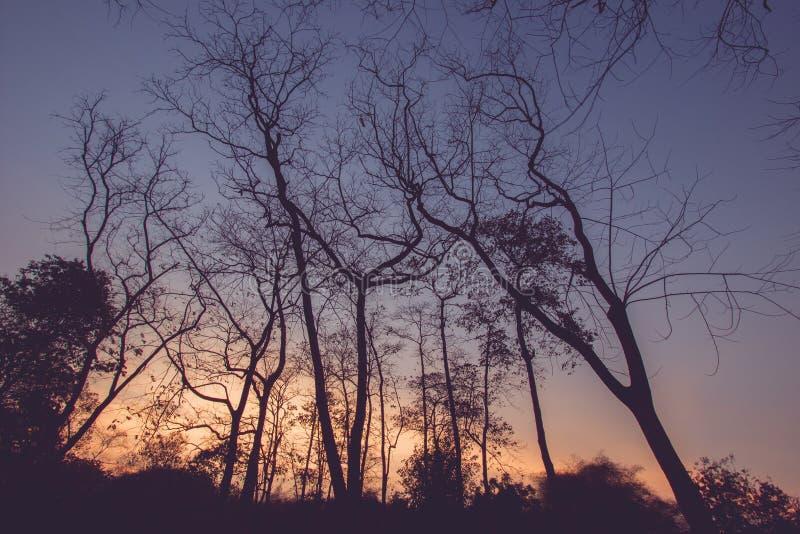 Blattlose Bäume mit Hintergrund des blauen Himmels stockfotografie