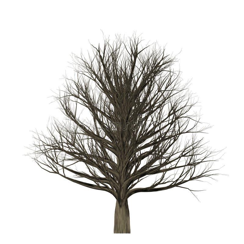 Blattloser Baum lokalisiert auf weißem Hintergrund, Illustration 3D vektor abbildung