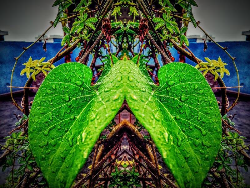 Blattporträt mit Spiegeleffekt lizenzfreie stockfotos