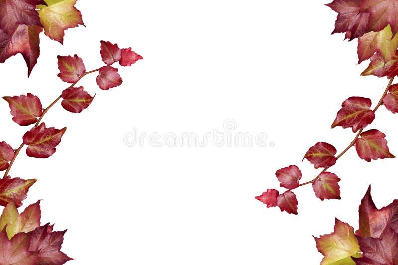 Blattrahmen auf weißem Hintergrund stockfoto