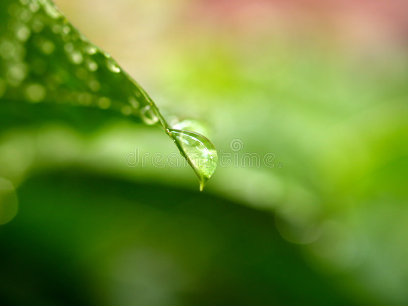 Blattwassertropfen 10 stockfoto