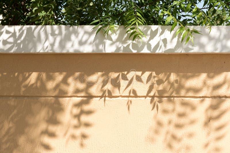 Blattwerfenschatten auf Gartenwand stockbilder