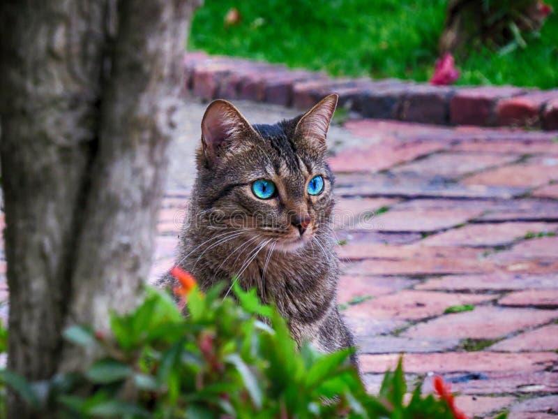 Blauäugige Katze, die auf Ziegelsteinboden im Garten sitzt stockfotos