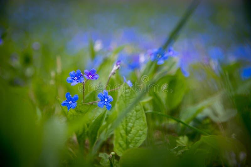 Blau vergisst mich nicht und bunte Wildflowers im Frühjahr lizenzfreie stockbilder
