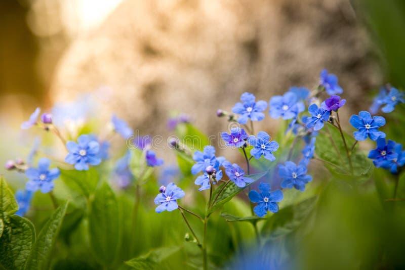 Blau vergisst mich nicht und bunte Wildflowers im Frühjahr stockbilder