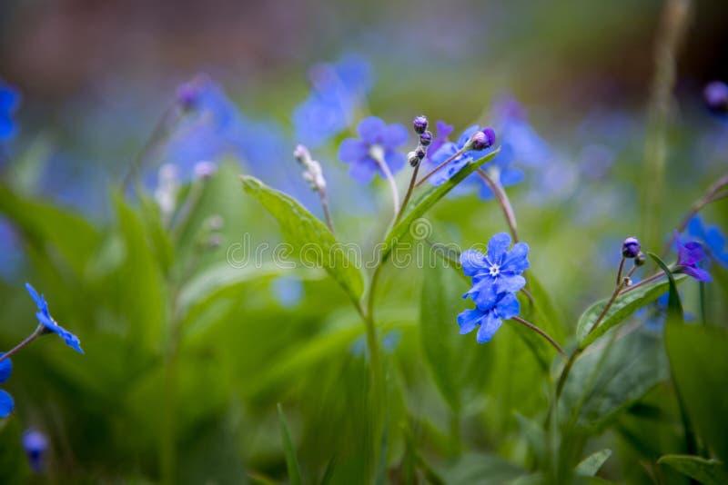 Blau vergisst mich nicht und bunte Wildflowers im Frühjahr stockfotos