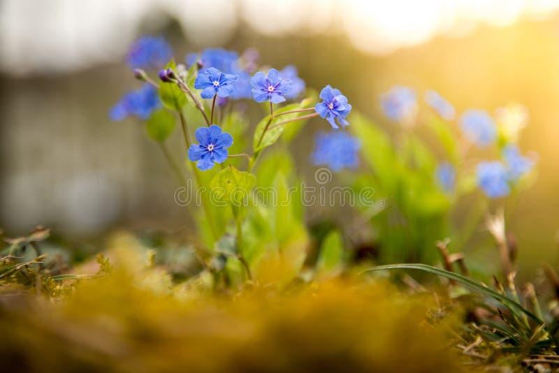 Blau vergisst mich nicht und bunte Wildflowers im Frühjahr lizenzfreie stockfotografie