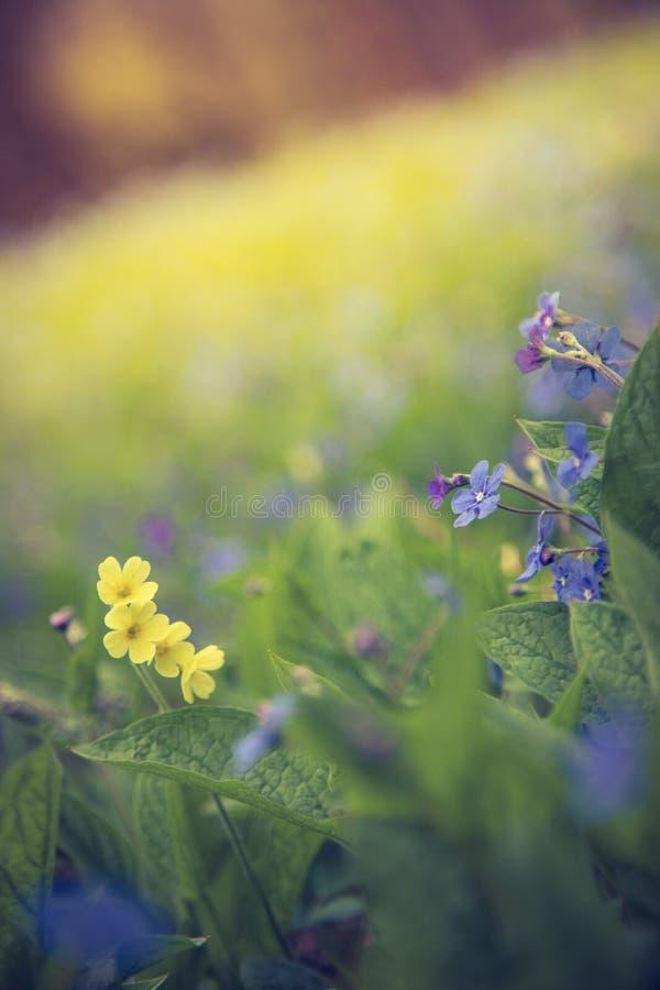 Blau vergisst mich nicht und bunte Wildflowers im Frühjahr stockfoto