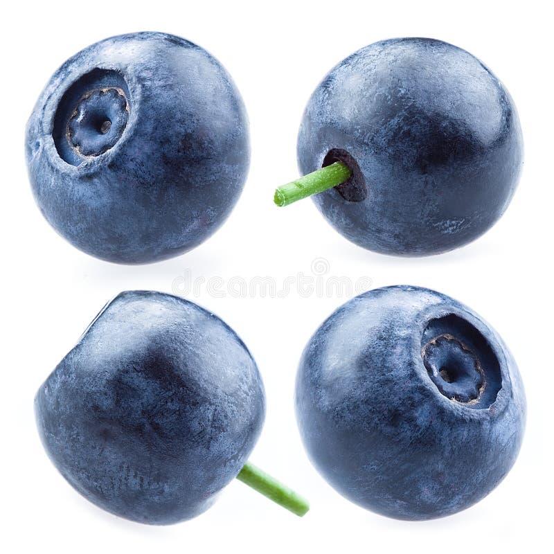 Blaubeere Ansammlung Beeren Getrennt auf weißem Hintergrund lizenzfreie stockbilder