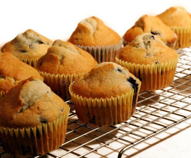 Blaubeere-Muffins lizenzfreie stockfotografie