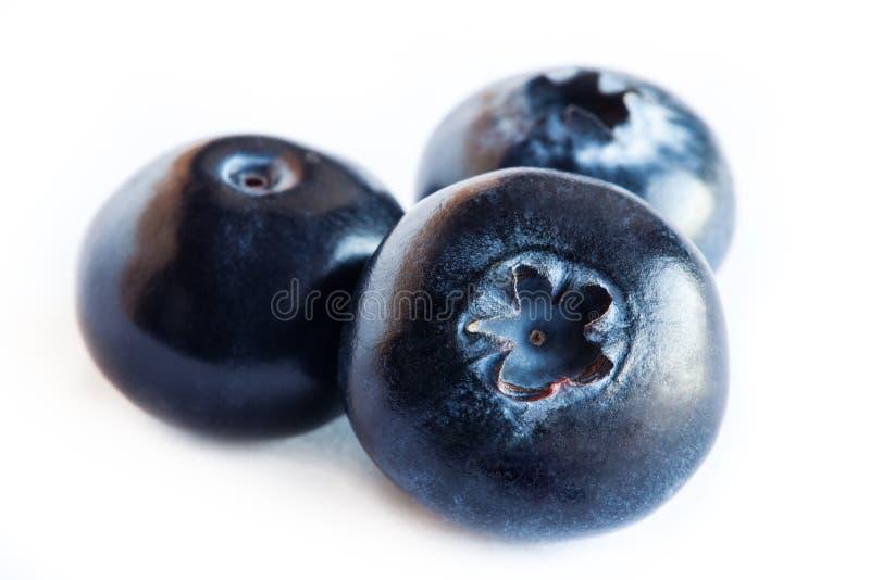 Blaubeere oder Heidelbeere oder Brombeere oder blaue Heidelbeere oder Heidelbeere lokalisiert auf weißem Hintergrundausschnitt stockfoto