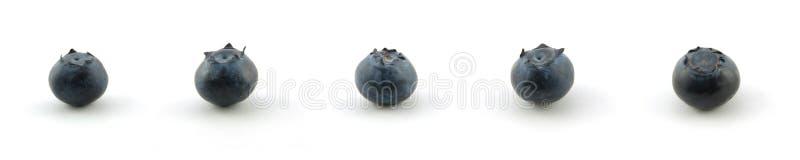 Blaubeereansammlung stockfoto