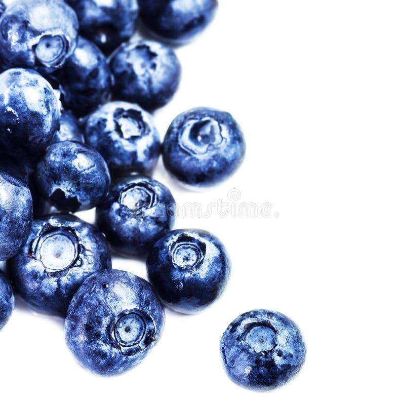 Blaubeeren- Antioxidans-superfood lokalisiert auf weißem Hintergrund m stockbild