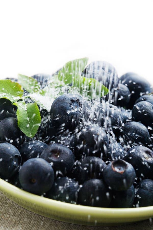 Blaubeeren mit Zucker stockfotografie