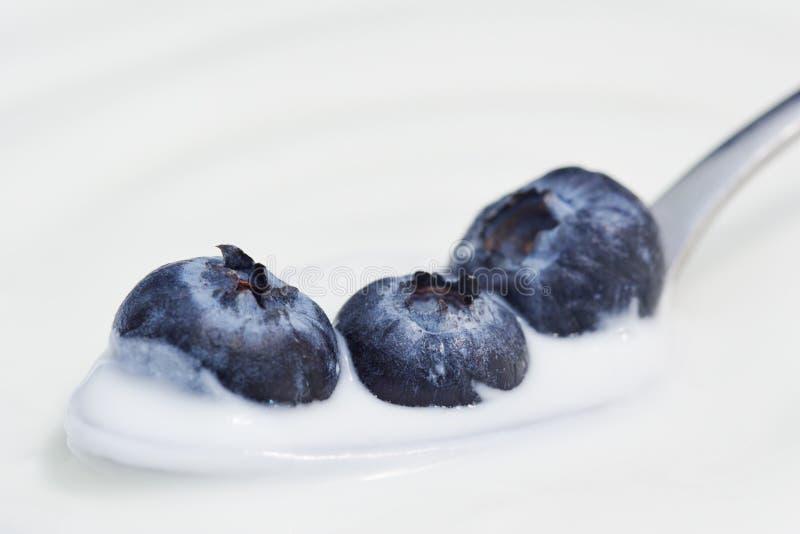 Blaubeeren und Joghurt auf einem Löffel stockfotografie