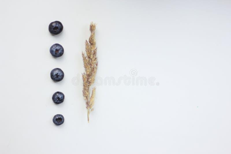 Blaubeerzusammensetzung lizenzfreie stockfotos