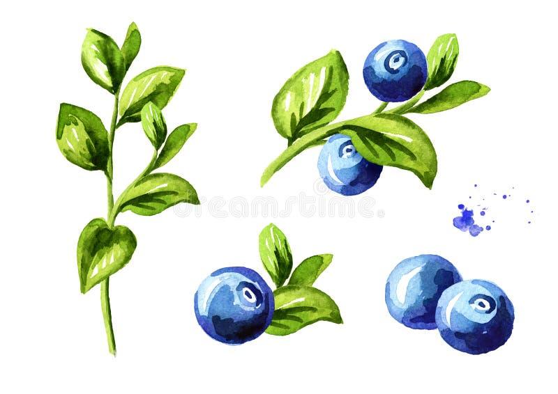 Blaubeerzusammensetzungen eingestellt Frische Beeren mit Blättern und Niederlassungen Übergeben Sie die gezogene Aquarellillustra stock abbildung
