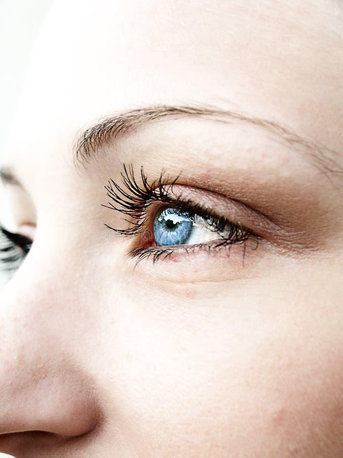Blaue Augen stockbild