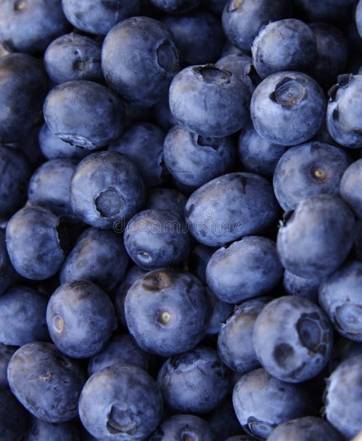 Blaue Beeren stockbilder
