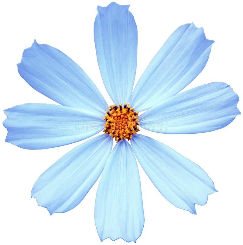 Blaue Blume lizenzfreies stockfoto