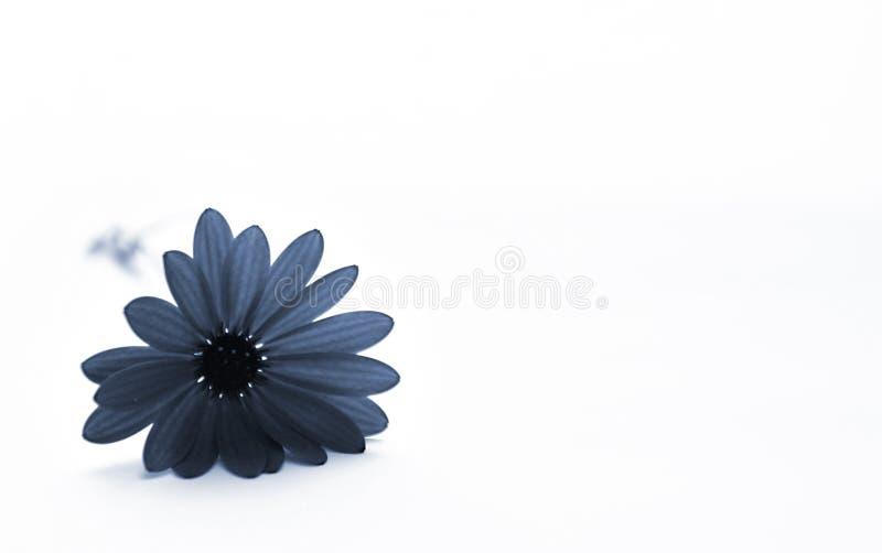 Blaue Blume stockfotos