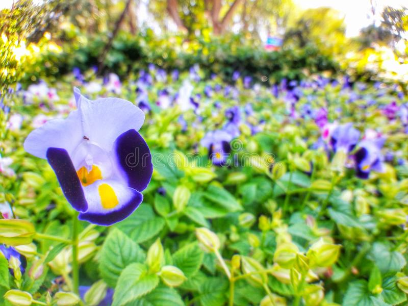 Blaue Blumen stockbilder