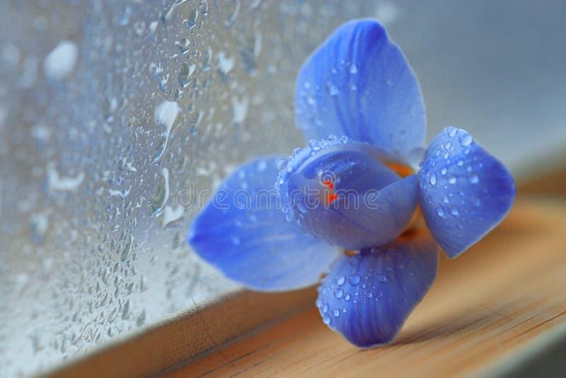 Blaue Blumen auf Buchroman lizenzfreie stockbilder