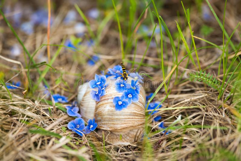Blaue Blumen fielen auf Schnecke durch Wind mit einer jungen Wespe lizenzfreie stockfotos