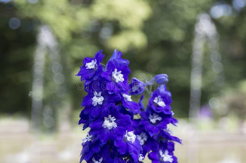 Blaue Blumen im Park, natürlicher Hintergrund mit blured fontain lizenzfreie stockfotos