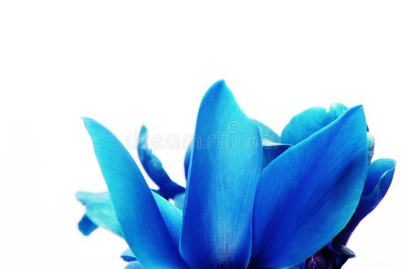 Blaue Blumenblätter lizenzfreies stockbild