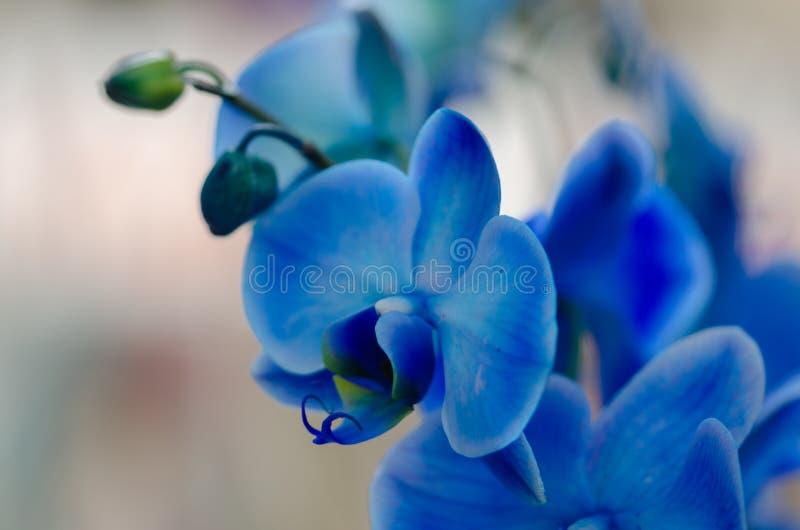 Blaue Blumenorchidee auf hellem Hintergrund lizenzfreie stockbilder