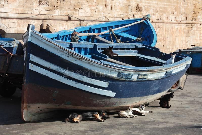 Blaue Boote und stillstehende Katzen stockbilder