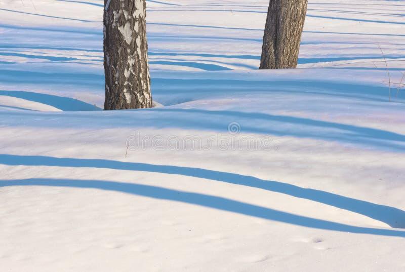 Blaue empfindliche Linien des Schattens auf dem weißen Schnee 2 stockfotografie