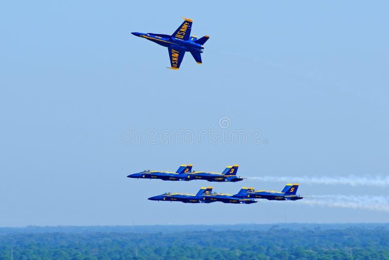 Blaue Engel im Flug stockfotos