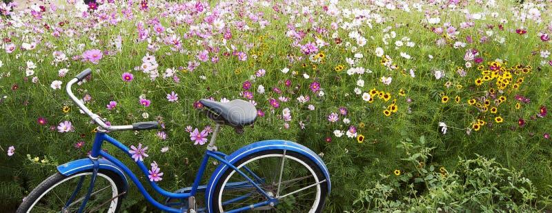 Blaue Fahrrad-Rosa-Feld-Blumen stockfotografie