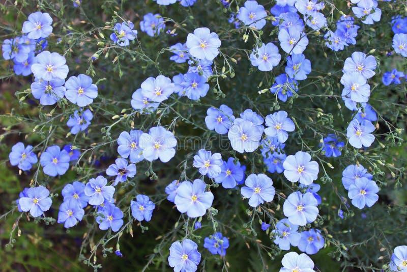 Blaue Farbe stockfotografie