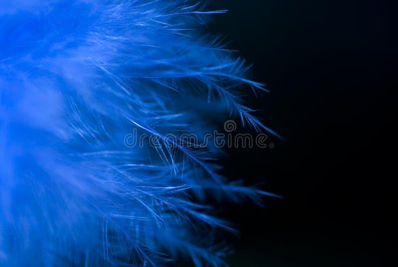 Blaue Federn stockbild