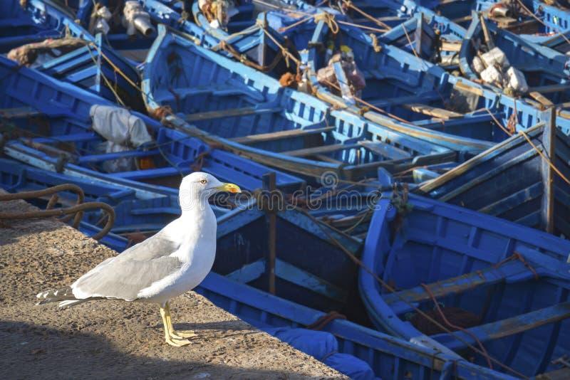 Blaue Fischerboote stockbild