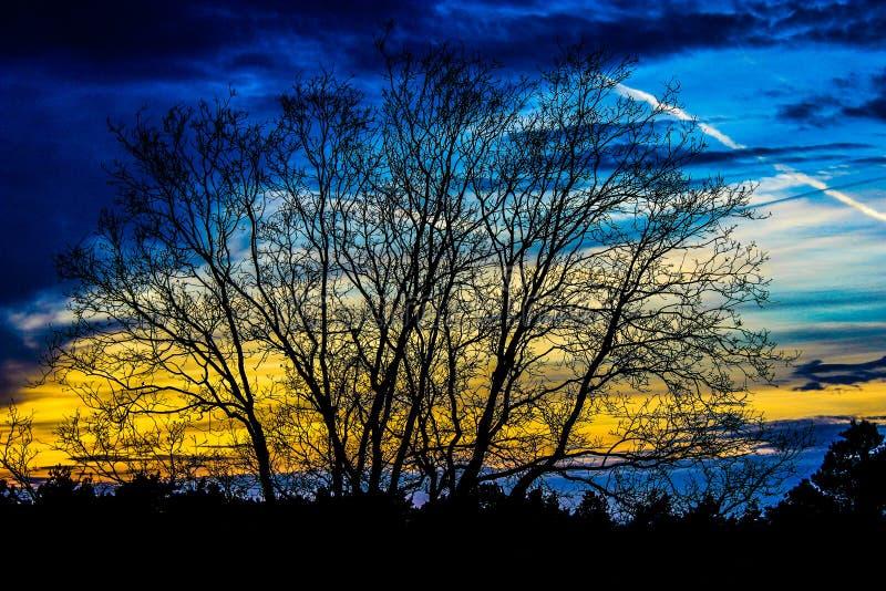 Blaue gelbe Himmel stockfoto