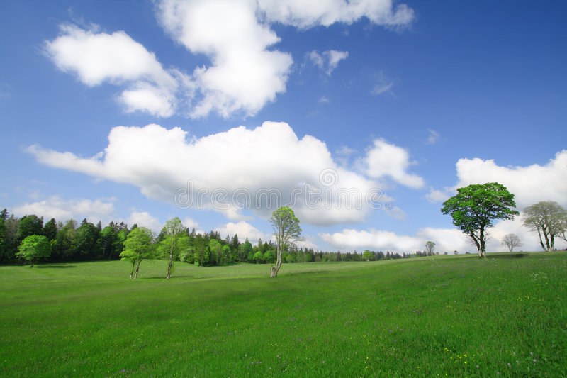 Blaue Himmel und grüne Bäume stockfotografie