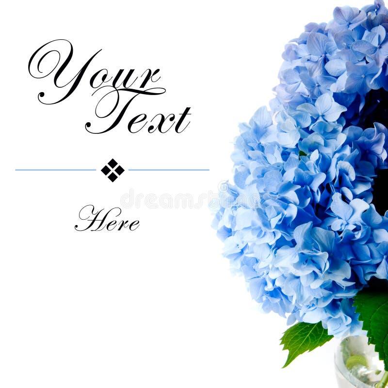 Blaue Hydrangeas mit Exemplar-Platz lizenzfreie stockbilder