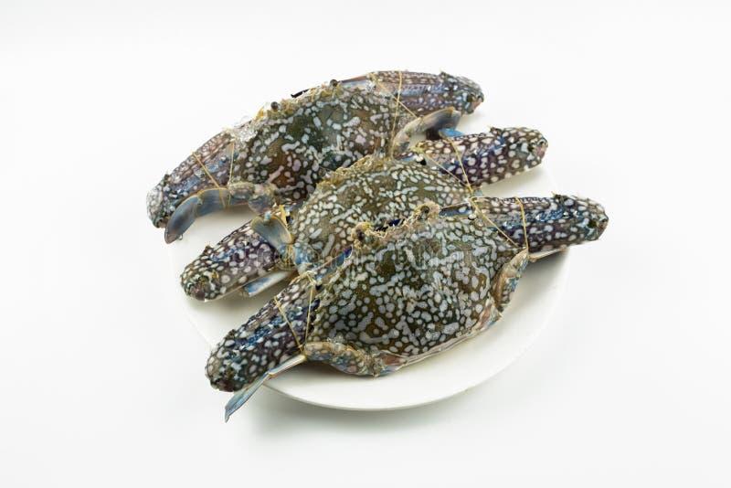 Blaue Krabbe lokalisiert auf weißem Hintergrund stockfotografie