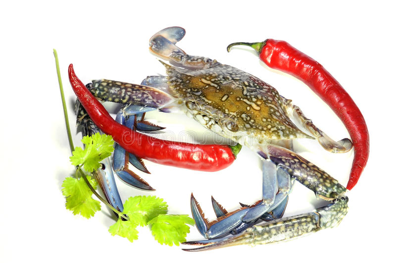 Blaue Krabbe und heiße Paprikas stockfotografie