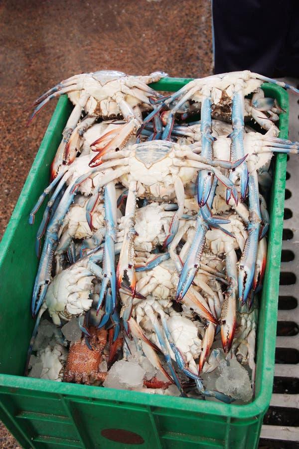 Blaue Krabben am Dubai-Fischmarkt stockbilder