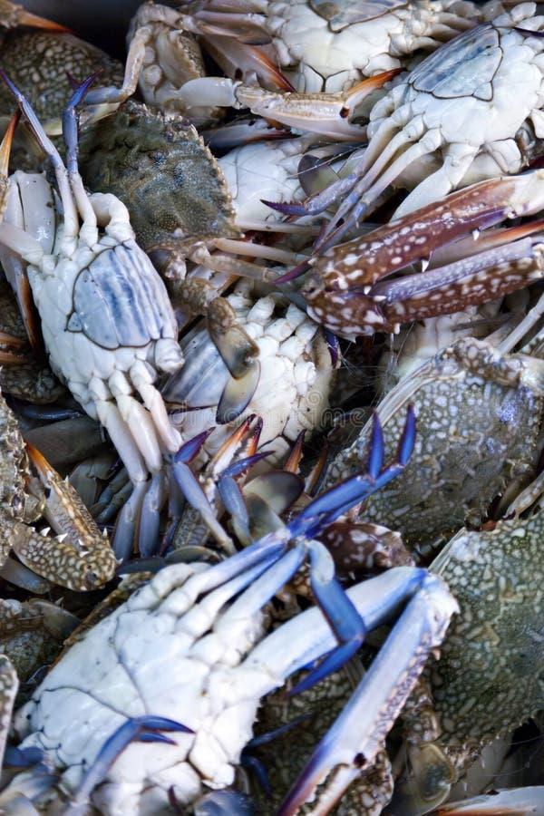 Blaue Krabben für Verkauf lizenzfreie stockfotos