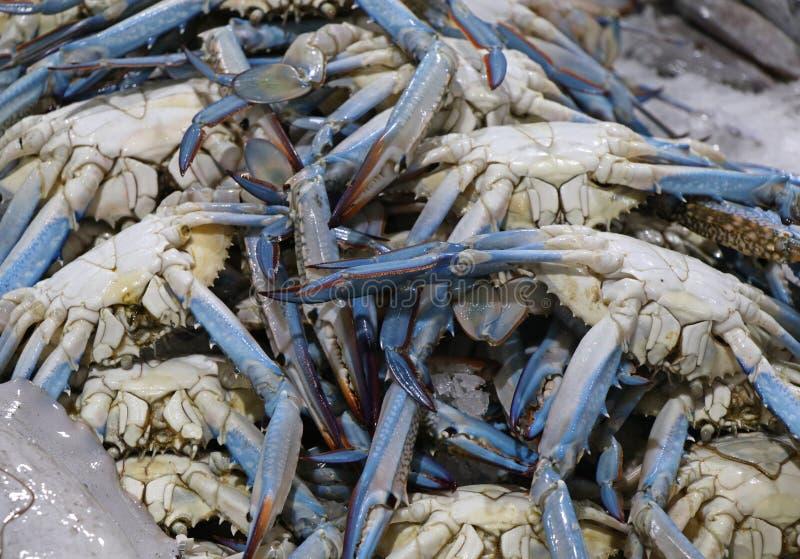 Blaue Krabben für Verkauf in einem Marktstall lizenzfreie stockfotos