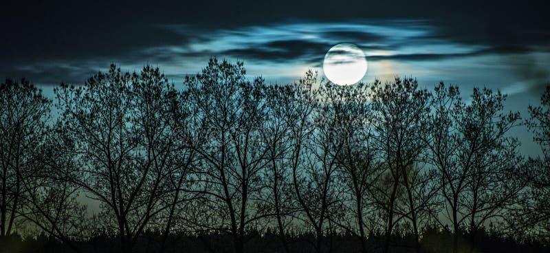 Blaue Landschaft mit Vollmond und Bäumen lizenzfreies stockfoto
