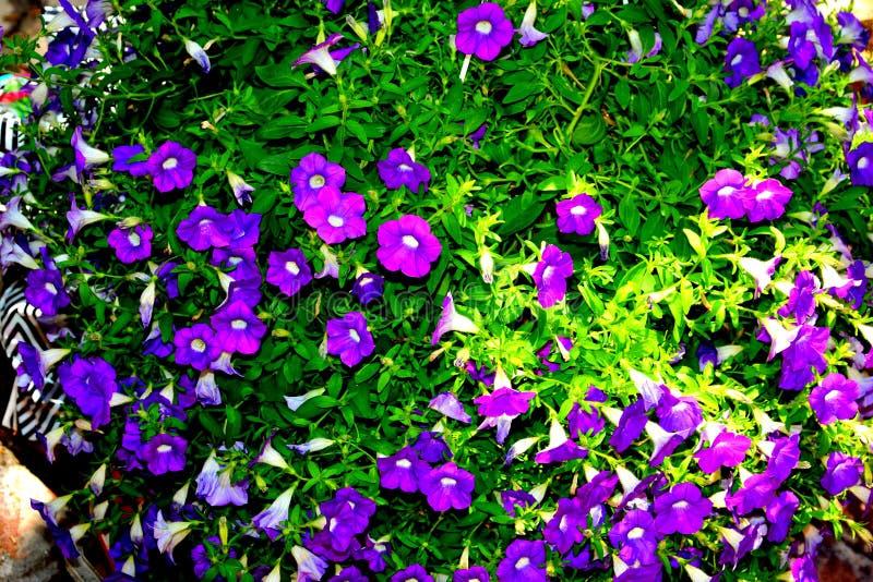 Blaue Landschaft Nette Blumen im Garten im Hochsommer, an einem sonnigen Tag stockbild